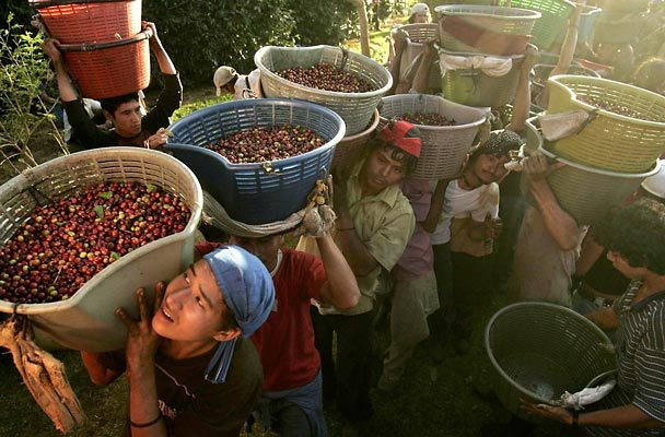 Coffee-farmers