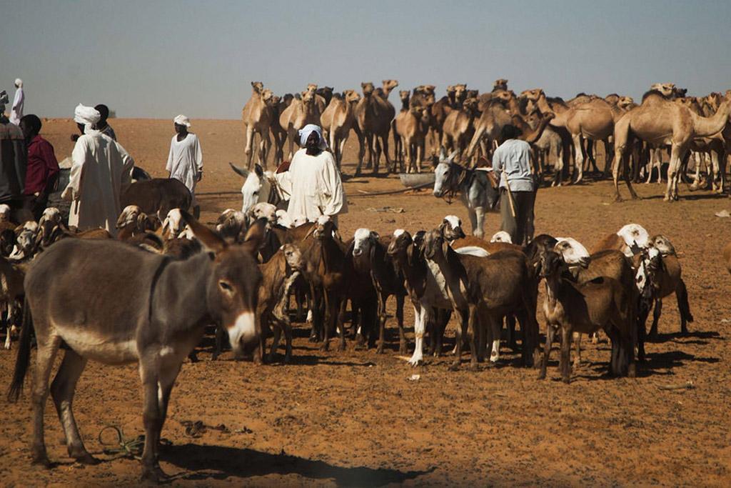 01-29-2015Golo_Darfur