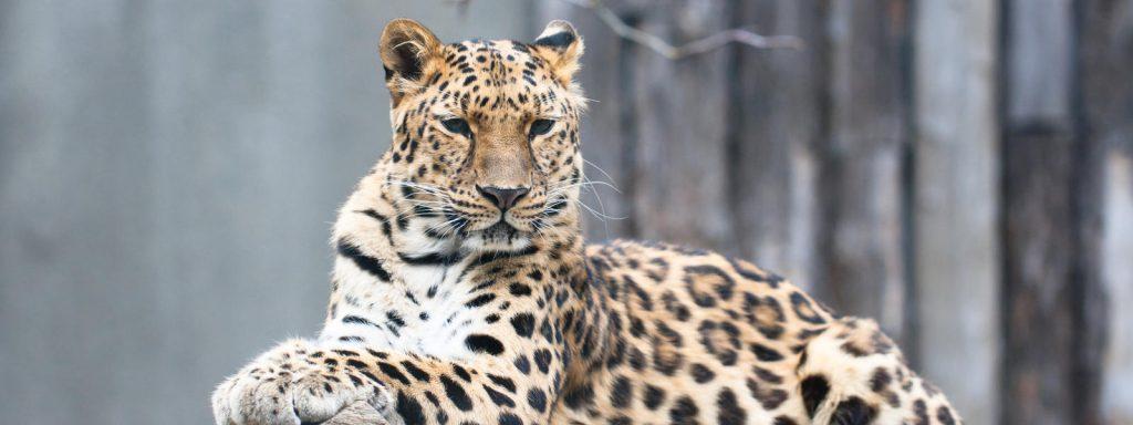 Снимка: WWF