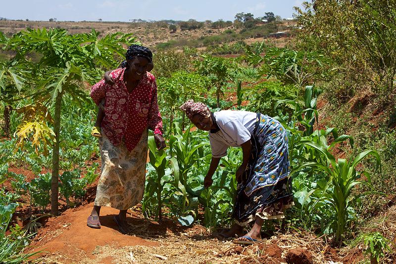 800px-Women_smallholder_farmers_in_Kenya